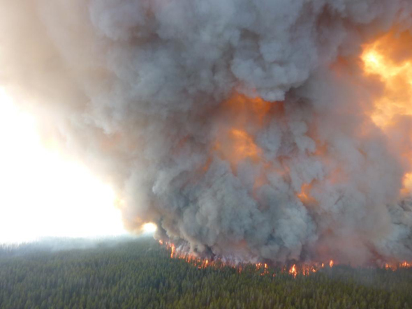 Photos Of Yellowstone S Arnica Fire Wildfire Today