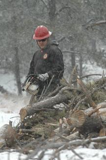With snow falling all around, a sawyer with the Bear Mountain Hand Crew of the South Dakota Division of Wildland Fire Suppression cuts firewood from a large slash pile located on private property, owned by Rex and Millie Piper, along Argyle Road, north of Hot Springs. Photo by Brett Nachtigall/Hot Springs Star