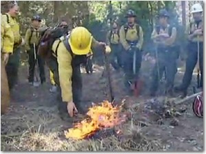 Frame from Restoring a Meadow, NPS video