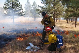 collecting fire effects data