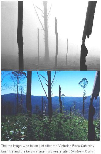 Black Saturday bushfires photos