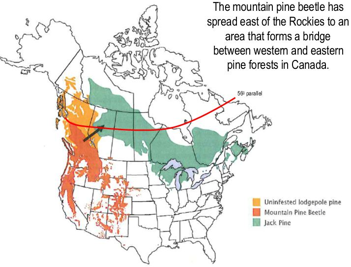 Beetle spread in North America Mountain Pine Beetle