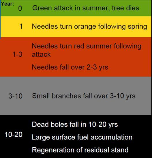 Beetle time line Mountain Pine Beetle