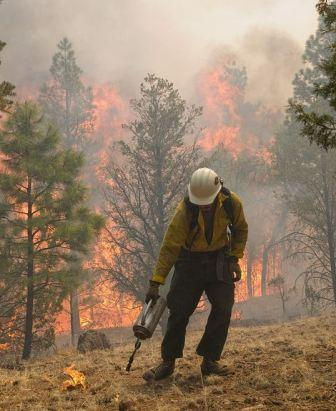 Wallow fire fight moves into New Mexico