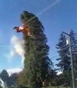 Powerline tree fire