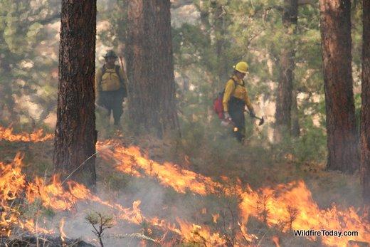 American Elk prescribed fire, Wind Cave National Park