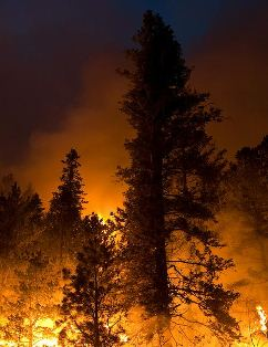 Little Bear Fire - June 13 Photo by Kari Greer-USFS