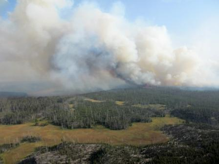 Cygnet Fire in Yellowstone NP