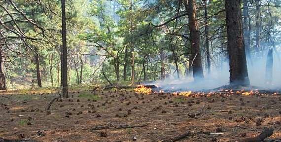 Swamp Ridge Fire, Grand Canyon NP