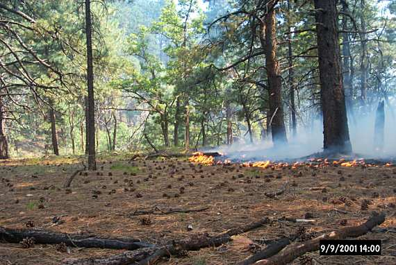 Swamp Ridge Fire, Grand Canyon NP