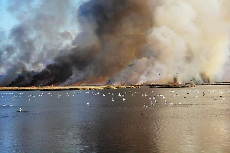 Rx fire at Malheur Nat'l Wildlife Refuge. USFWS photo by Carla Burnside.