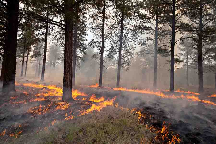 Sitgreaves Complex Fire