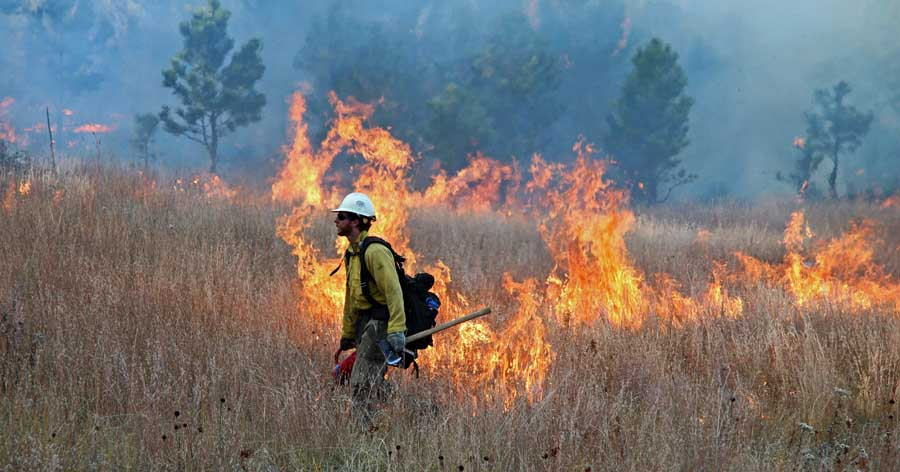 Norbeck Section 2 prescribed fire