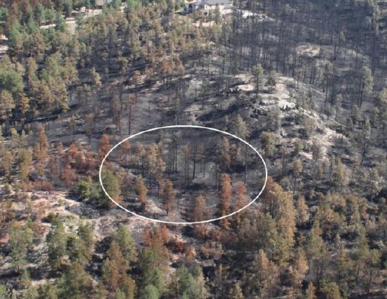 Origin of the Black Forest Fire