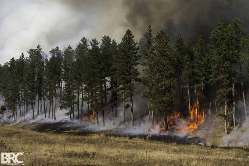 Whaley Gulch prescribed fire