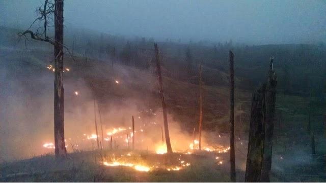 Wildlife Loop Fire