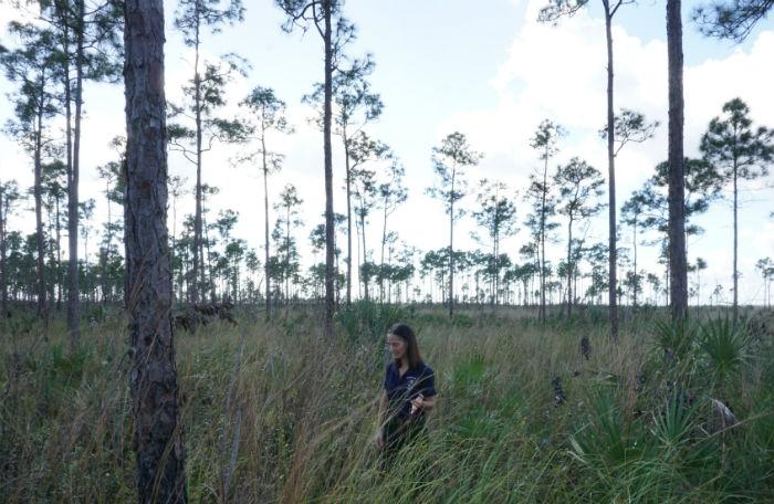 Everglades prescribed fire