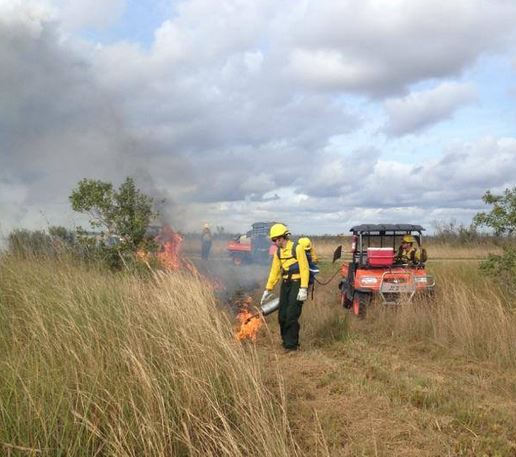 prescribed fire Everglades National Park