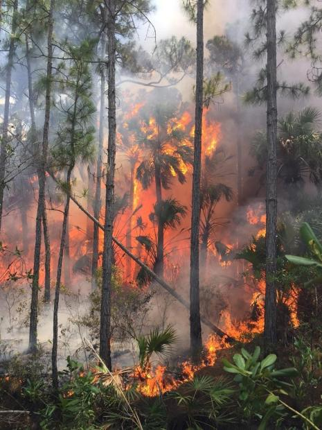 Mud Lake Complex of Fires