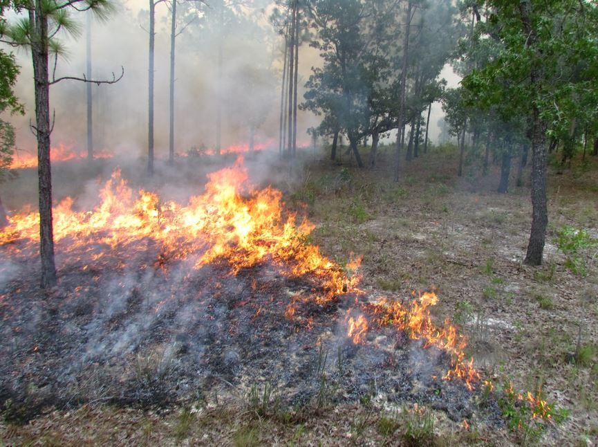 Prescribed fire, butterfly research