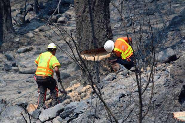 removing hazardous tree highway