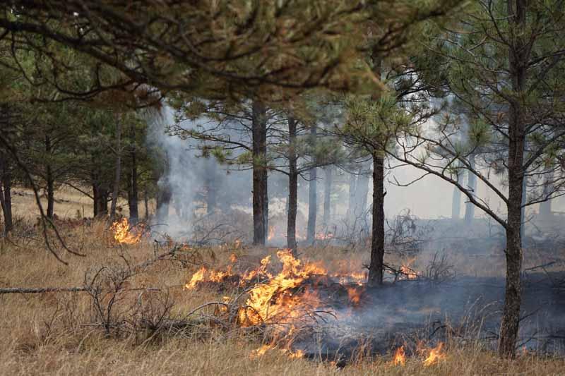 Argyle Road Fire. Photo by Bill Gabbert.