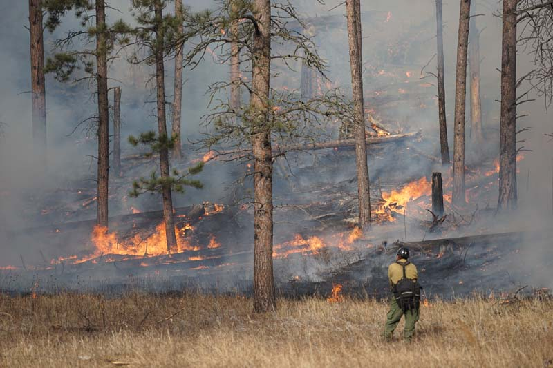 Whaley prescribed fire