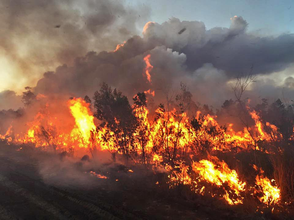 Prescribed fire at Everglades National Park