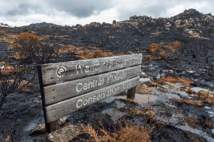World Heritage site burned Tasmania
