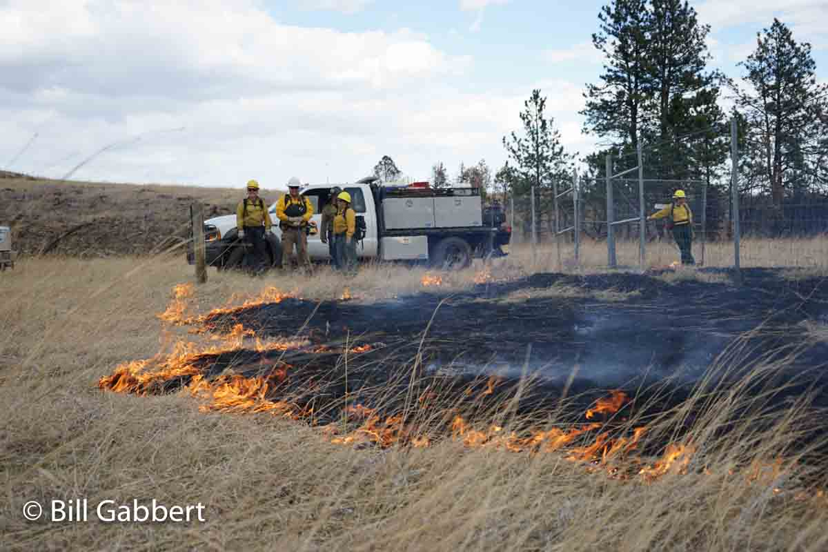 burning out fire line