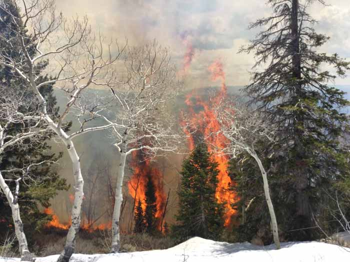 Monument Peak prescribed fire