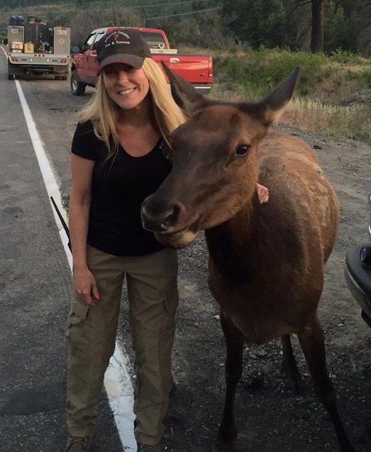 Elk at fire