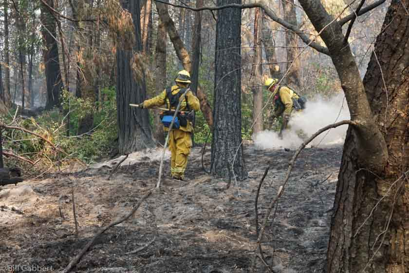 Researchers find tree-bark thickness is affected by fire occurrence
