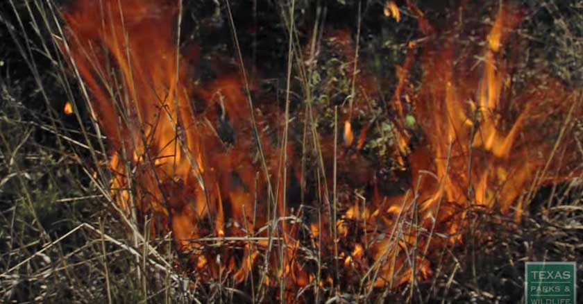 Prescribed fire video from Texas