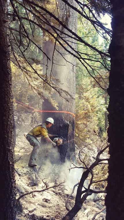 sawyer Minerva 5 Fire