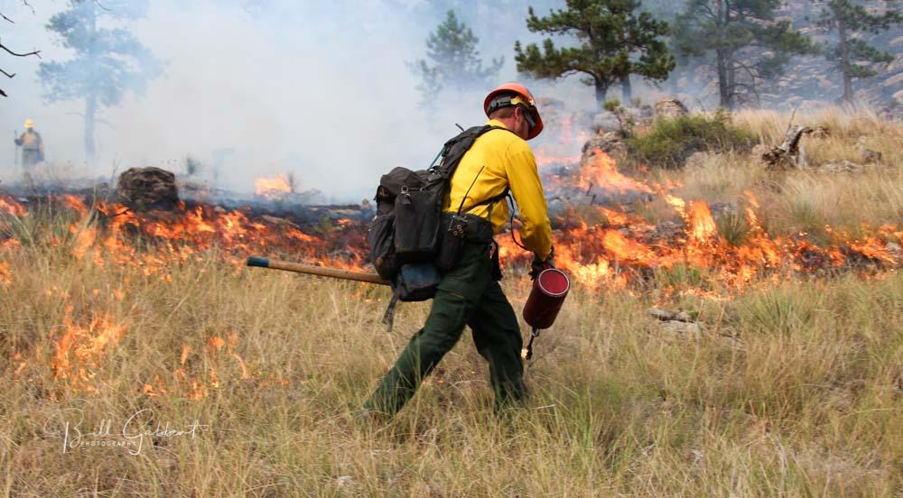 Shep Canyon Fire, Black Hills South Dakota
