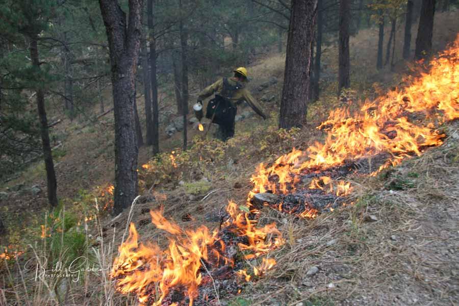 American Elk prescribed fire Wind Cave National Park