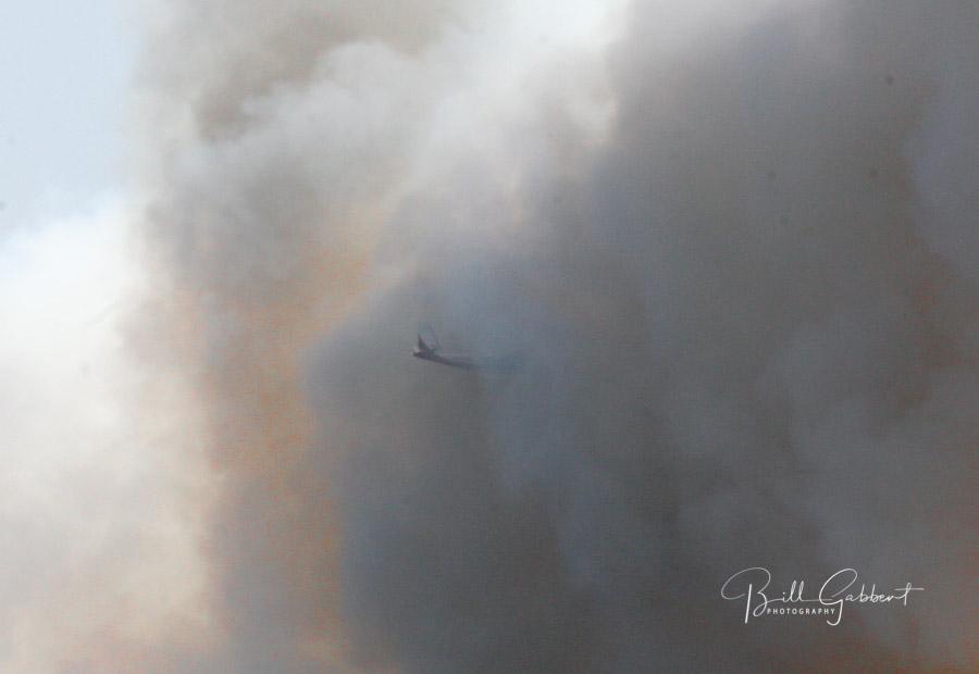 bird dog airplane fire smoke wildfire