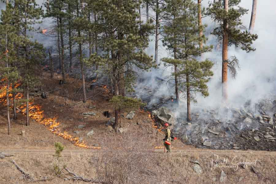 Whaley Prescribed Fire Black Hills of South Dakota