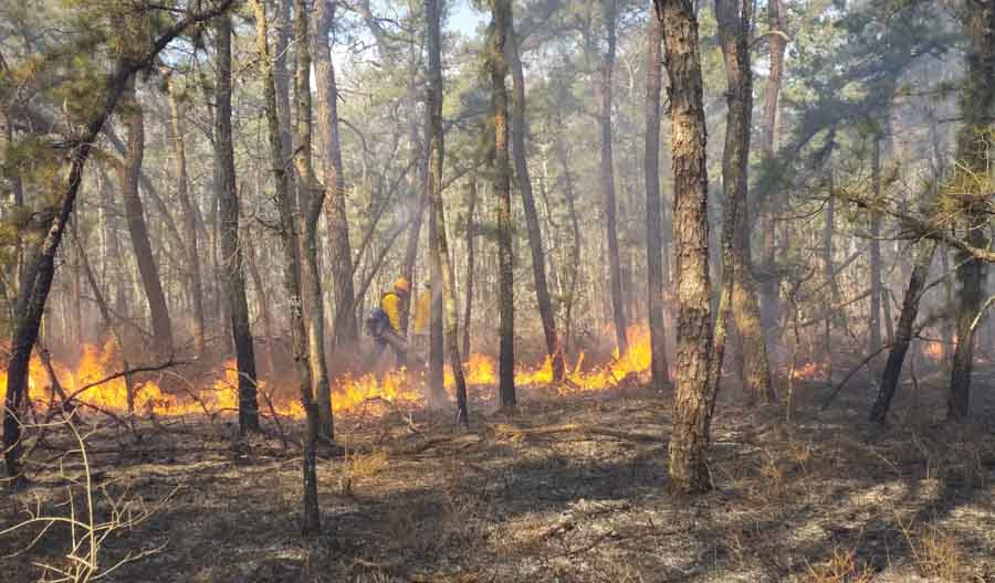 prescribed fire New Jersey