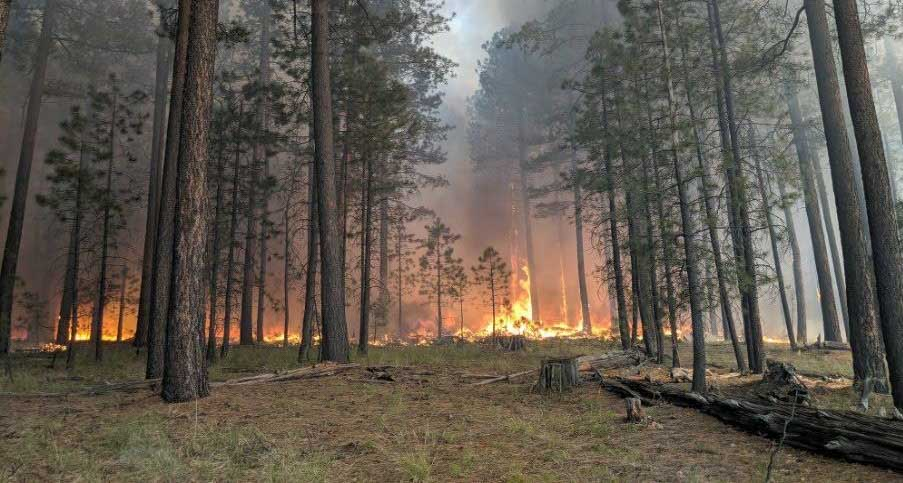 Coldwater Fire, June 8, 2019