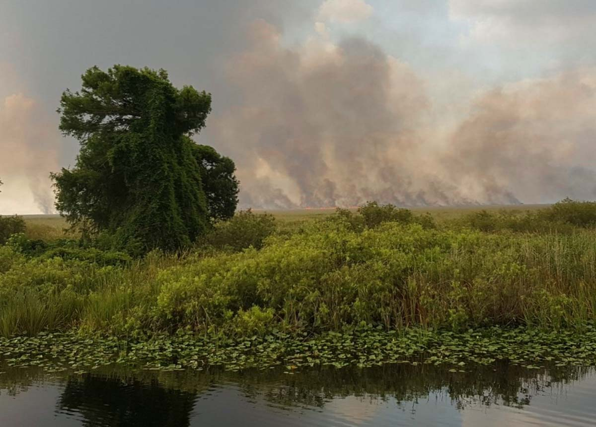 Sawgrass Fire everglades Florida