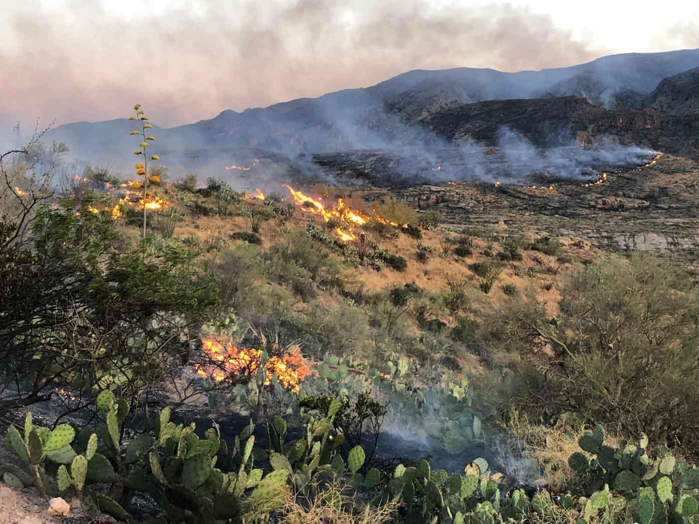 Woodbury Fire Phoenix Roosevelt