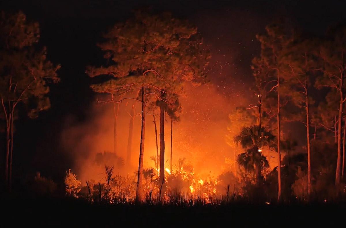 film fire Big Cypress National Preserve