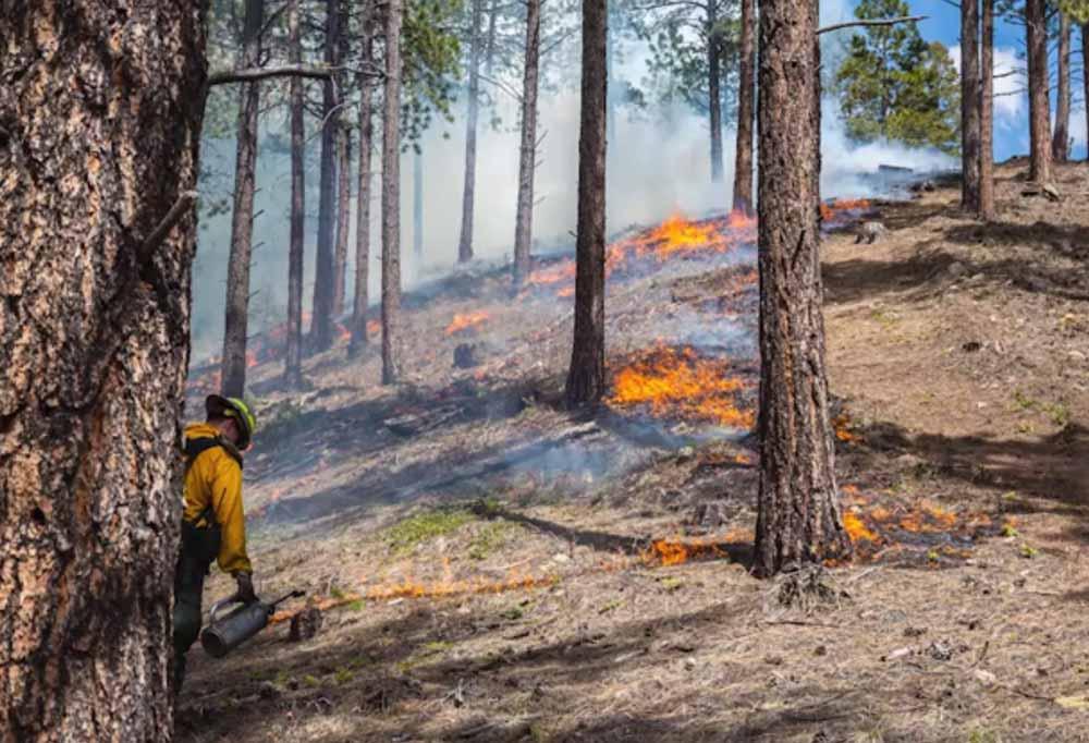 fuel management fire forest