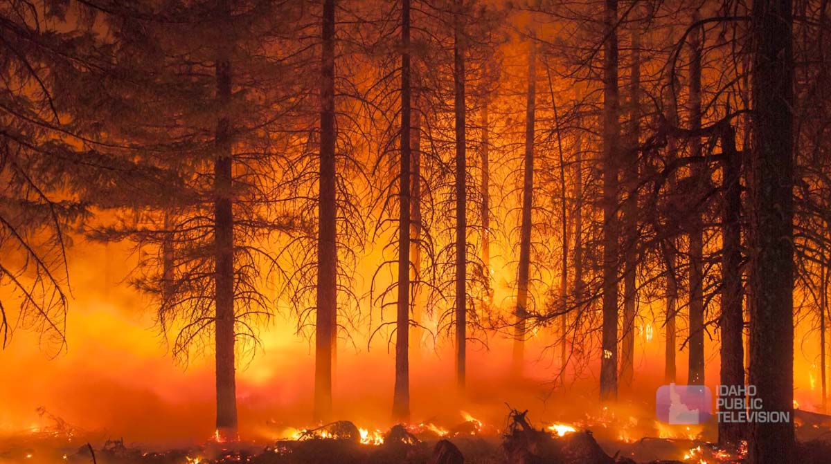 """""""Living with wildfire"""""""