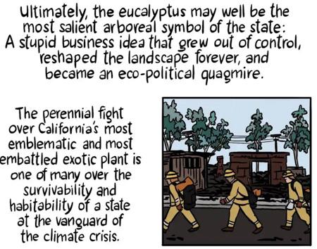 Eucalyptus fire wildfire