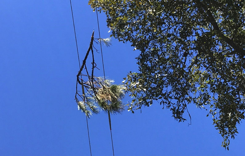 Vegetation power line cause faults fires electrically