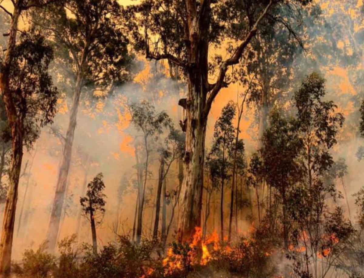 bushfires firefighters fires Victoria Australia