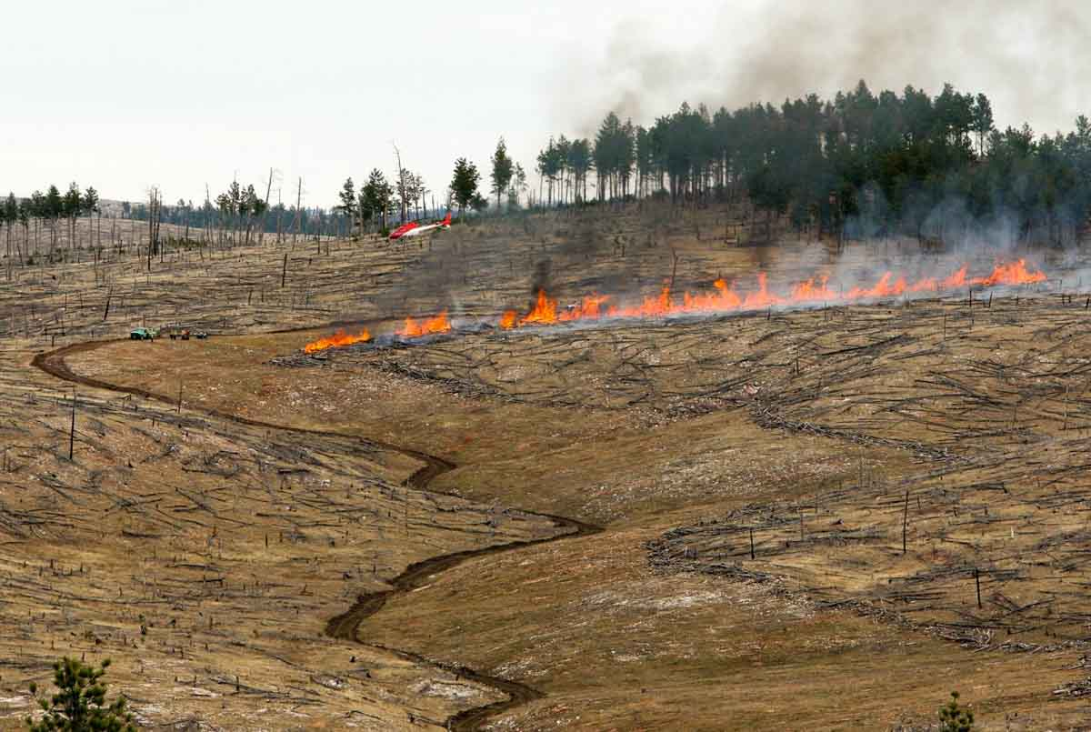 Anti-Horse Project prescribed fire Black Hills National Forest